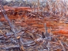 goldfields-victoria